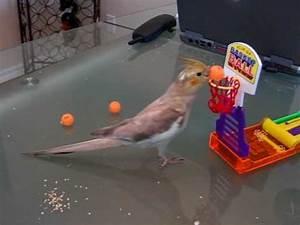 Kiwi cockatiel bird, playing basketball #2 - YouTube