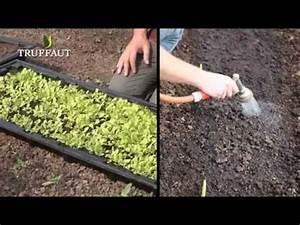 Quand Semer Les Tomates : eclaircir et repiquer au potager jardinerie truffaut tv ~ Melissatoandfro.com Idées de Décoration