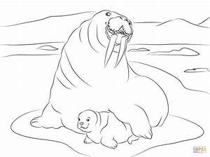 Walrus With Cute Baby Coloring Page Free Printable