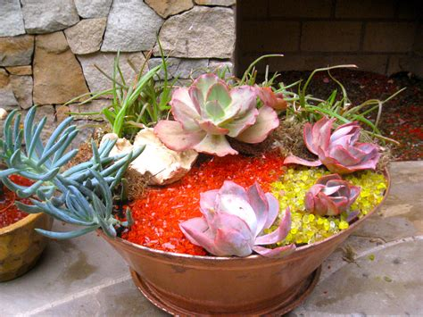 succulent gardens in pots succulent gardens in pots images