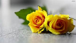 Yellow Flowers Wallpapers HD Pictures     One HD Wallpaper Pictures      Beautiful Pictures Of Yellow Roses