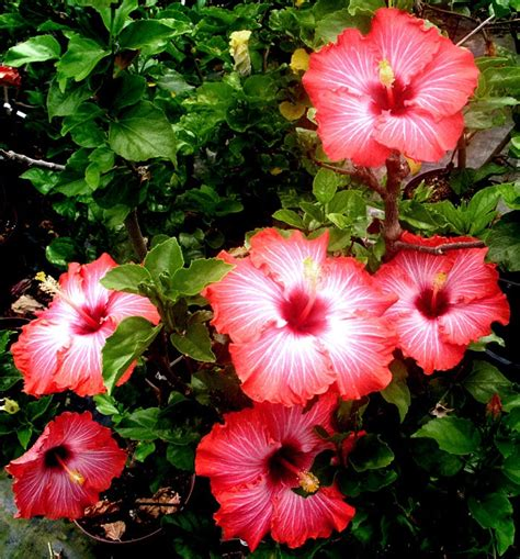 287 best images about flowers galore on