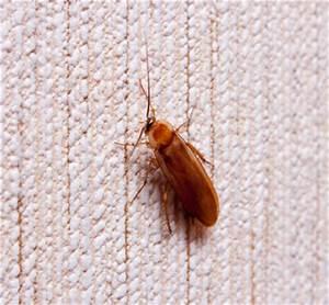 Kakerlaken ähnliche Insekten : bilder und fotos von kakerlaken ~ Articles-book.com Haus und Dekorationen