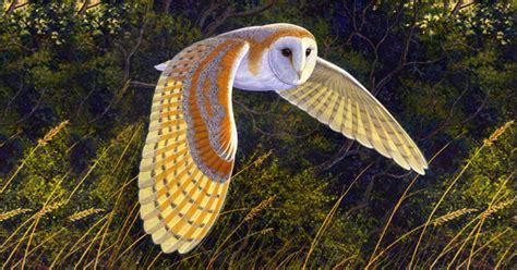 barn owl facts barn owl facts barn owl barn owls information