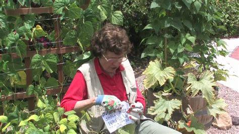Nematode In Home Garden how to get rid of nematodes in the vegetable garden