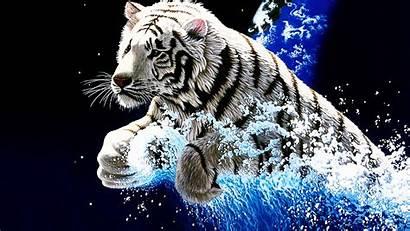 Tiger Desktop Animal Tigers Phone Tier Computer