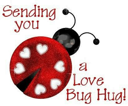 love bug quotes quotesgram