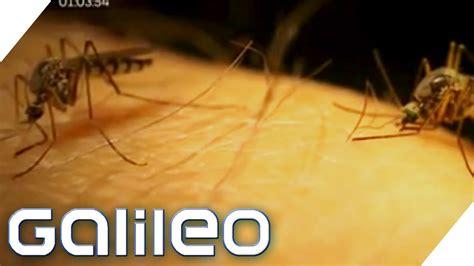 Stechmücken Im Zimmer by Faszinierend Was Hilft Gegen M 252 Cken Im Zimmer Tun