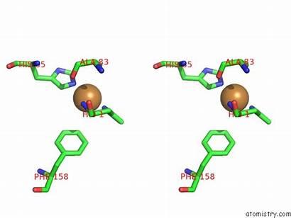 Copper Cu Pdb Lytic Thuringiensis Polysaccharide Bacillus