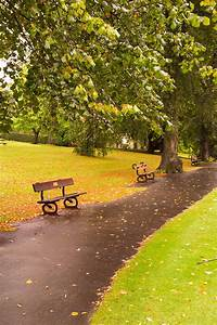 Free Images : landscape, tree, nature, grass, road, bench ...