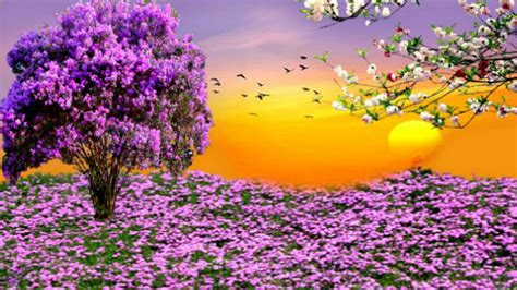 Spring Hd Wallpapers Wallpapersafari