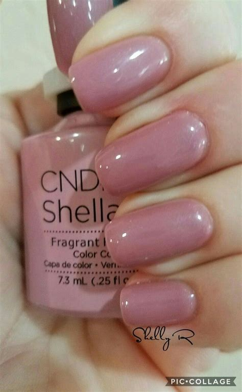 manicure colors best 25 shellac colors ideas on cnd shellac
