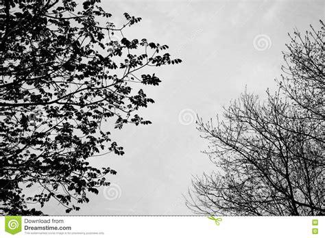 disegni bianco e nero piccoli disegni di alberi in bianco e nero disegni di natale 2019