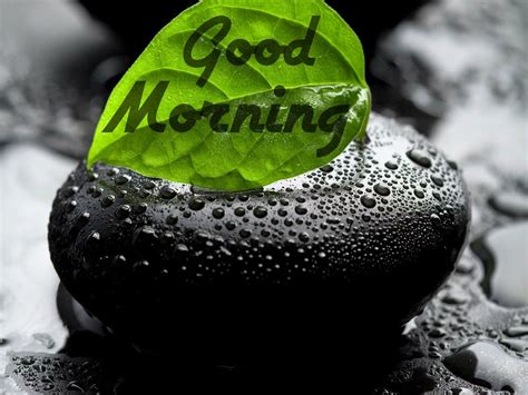 images  gud morning good morning  festival