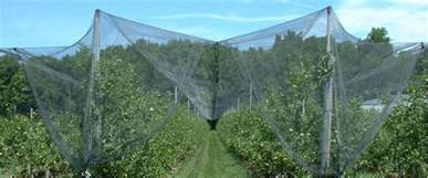 hail netting protecting your crops fruit trees and gardens