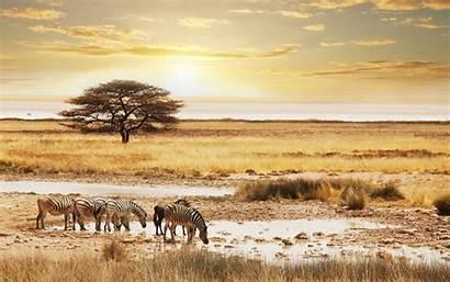 Safari Wallpapers Namibia