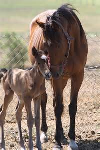 Horses Mare with Foal