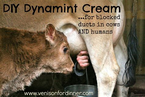 Diy Dynamint Cream For Blocked Ducts In Cows And Humans I