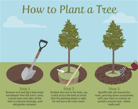 how to plant a tree selecting the right tree for your garden fix com