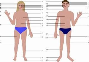 Cartoon Human Body Parts Clip Art at Clker.com - vector ...