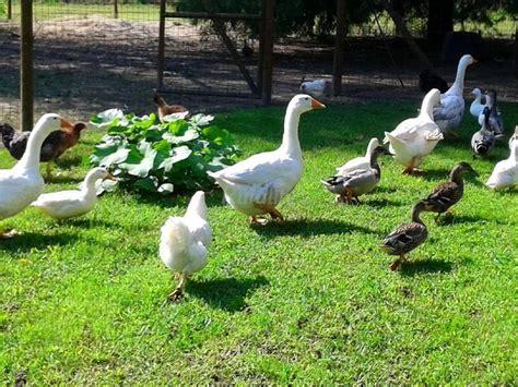 Animali Da Cortile Gratis by Foto Di Al Canton Casa Rural En San Michele Al
