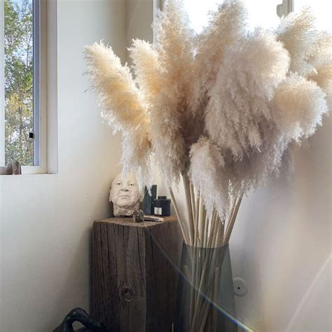 pampas grass decor trend  blowing   instagram