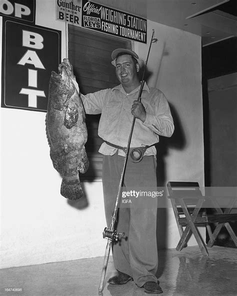 grouper goliath pound jewfish ounce stands