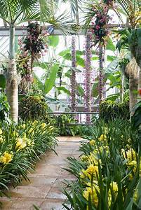 Escape to the chicago botanic garden orchid show for Chicago botanic garden orchid show