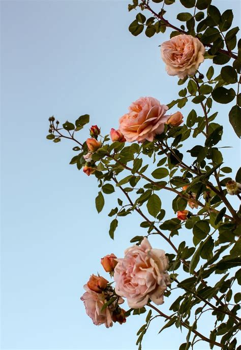 aesthetic laptop backgrounds flowers