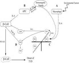 Networking Between Cytokine Gene Polymorphisms Profile And