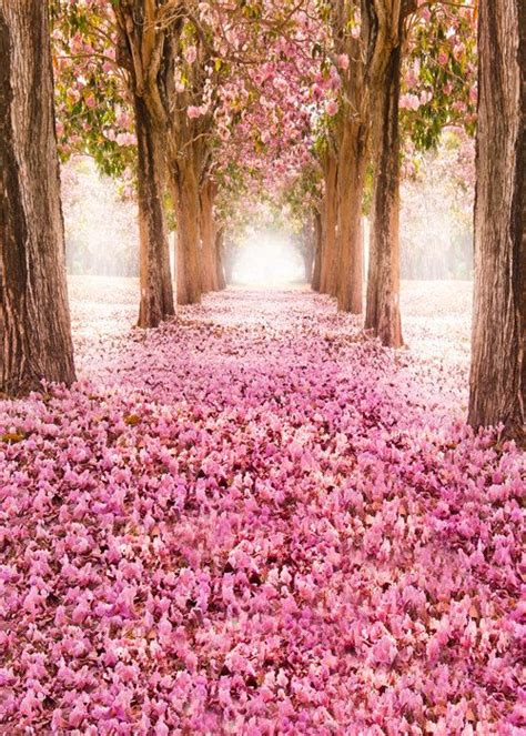 Tree Photo Backdrop by Pink Flowers Photo Backdrop Cherry Tree