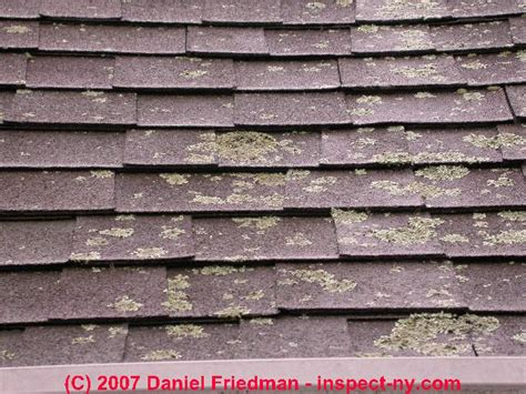 Remove Or Prevent Roof Moss, Faqs Roof Repair Solutions Houston How To Fix Leak On Travel Trailer Install Osb Sheathing A Leaky Clay Tile Rooftop Garden Restaurant Bar Nottingham Tar And Gravel Calgary Standing Seam Roofing Australia Shingles Gaf Timberline Hd