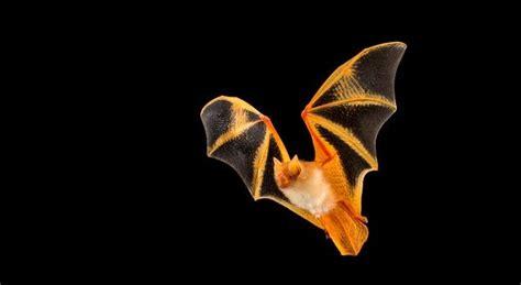 The bat blueprint - On Biology