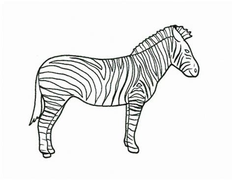 zebra coloring page coloring pages