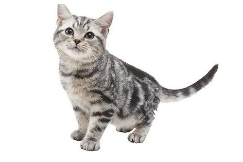 R4 CATS TÉLÉCHARGER NINTENDOGS