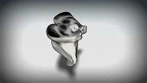 3D Brainstem Animation: Midbrain - YouTube