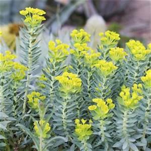 fleur jaune liste ooreka With modele de rocaille de jardin 15 fleur qui fleurit en avril ooreka