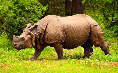Chitwan Wildlife Safari - Travel House Nepal
