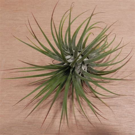 air garden plants best type of plant for your desk telecommute and remote jobs career tips