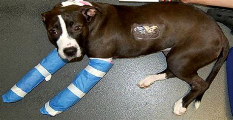 abused dog petted    time fears   life