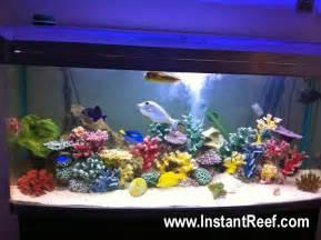 60 gallon marine fish aquarium with corals