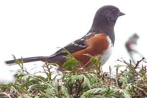 Bird Identification Washington State