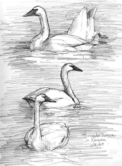 north american bird sketches drawing class pencil