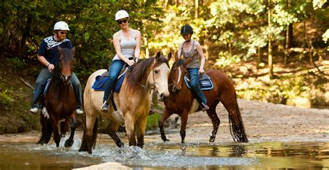 Sydney's Best Horse Riding | Horse Riding, Riding Lessons ...