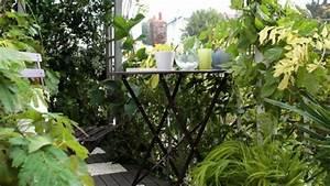 Plantes D Hiver Extérieur Balcon : id e d co avec plantes de balcon m me pendant l 39 hiver ~ Nature-et-papiers.com Idées de Décoration