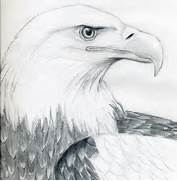 Bald Eagle Feather Dra...