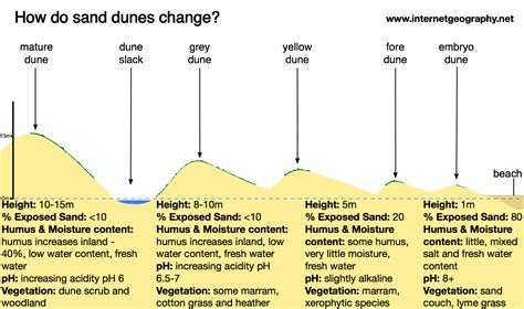 how are sand dunes formed internet geography