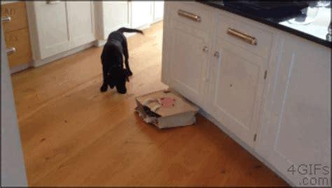 Cat hiding in bag scares dog