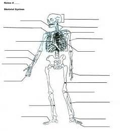 Watch more like Skeletal Anatomy Diagram