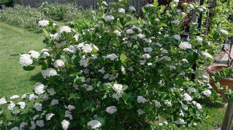 Garten Pflanzen Frühjahr by Alles Zur Aronia Pflanzen Pflege Im Garten Und Auf Aronia